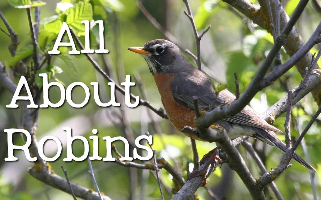 Learning about Robins